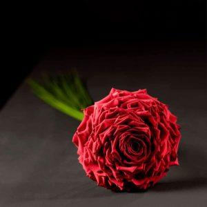 Glamelia di rose